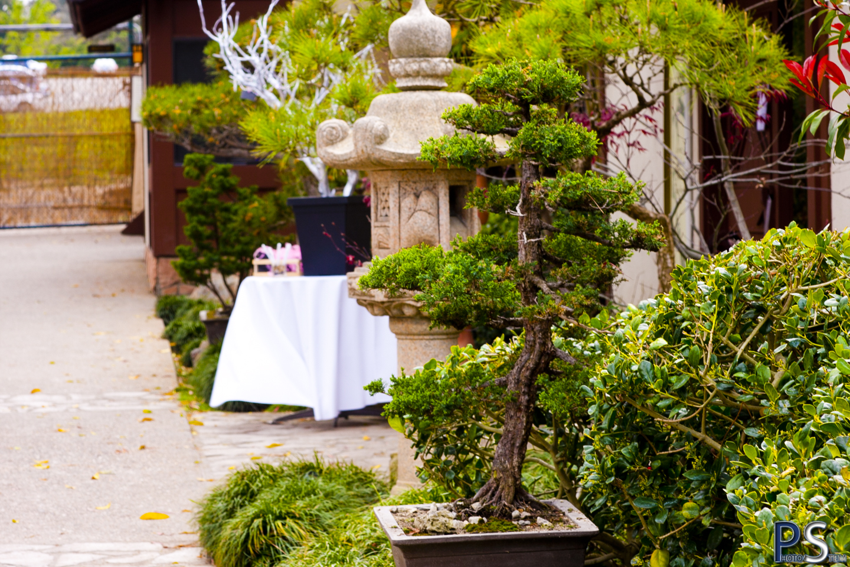 Allen Jackies Wedding Day Japanese Garden Long Beach